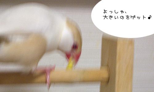 ダメダメちゃん_1