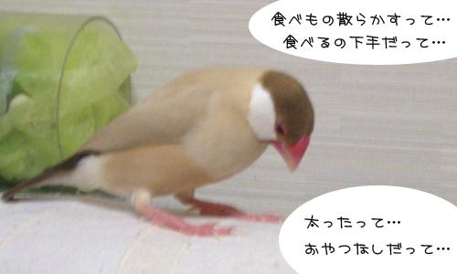 ダメダメちゃん_4