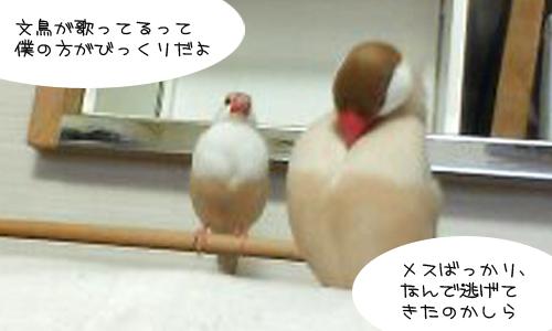 我が家の鳥昔話_3