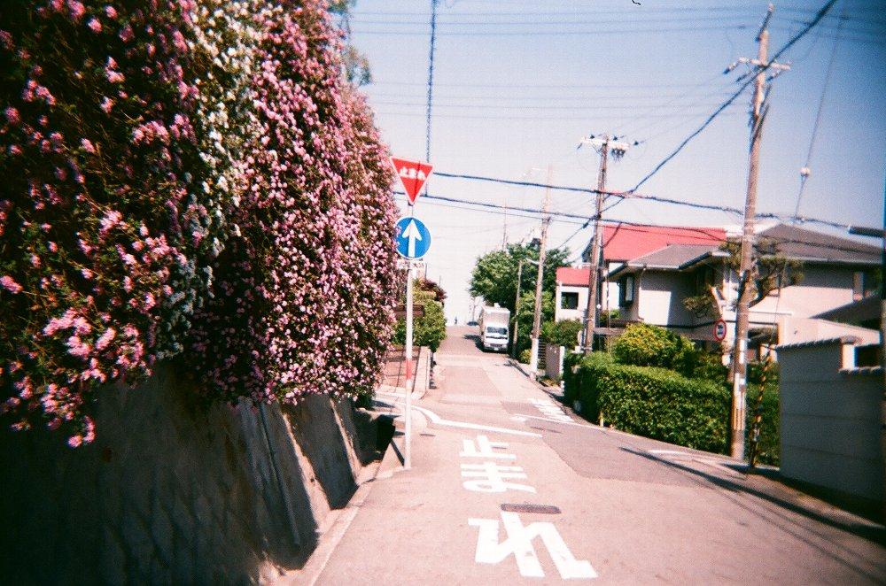 JAPAN OPTICSのConcord C180で撮った花咲く坂