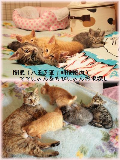 1405_Qooおねえちゃん2