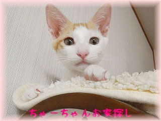 @未来ママさんちゃーちゃん20140811104352e4f