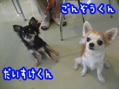 shibugoe1.jpg
