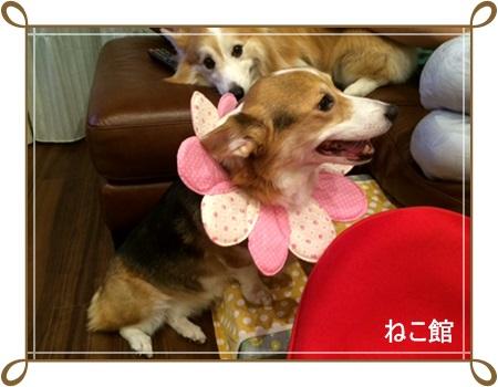 blog10_20140821160929d7e.jpg