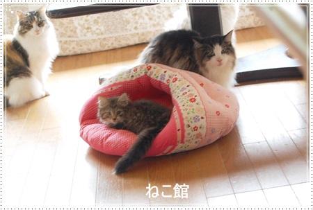 blog5_20140527141110cd2.jpg