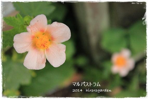 IMG_114811.jpg