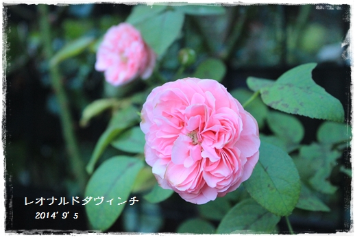 IMG_256911.jpg