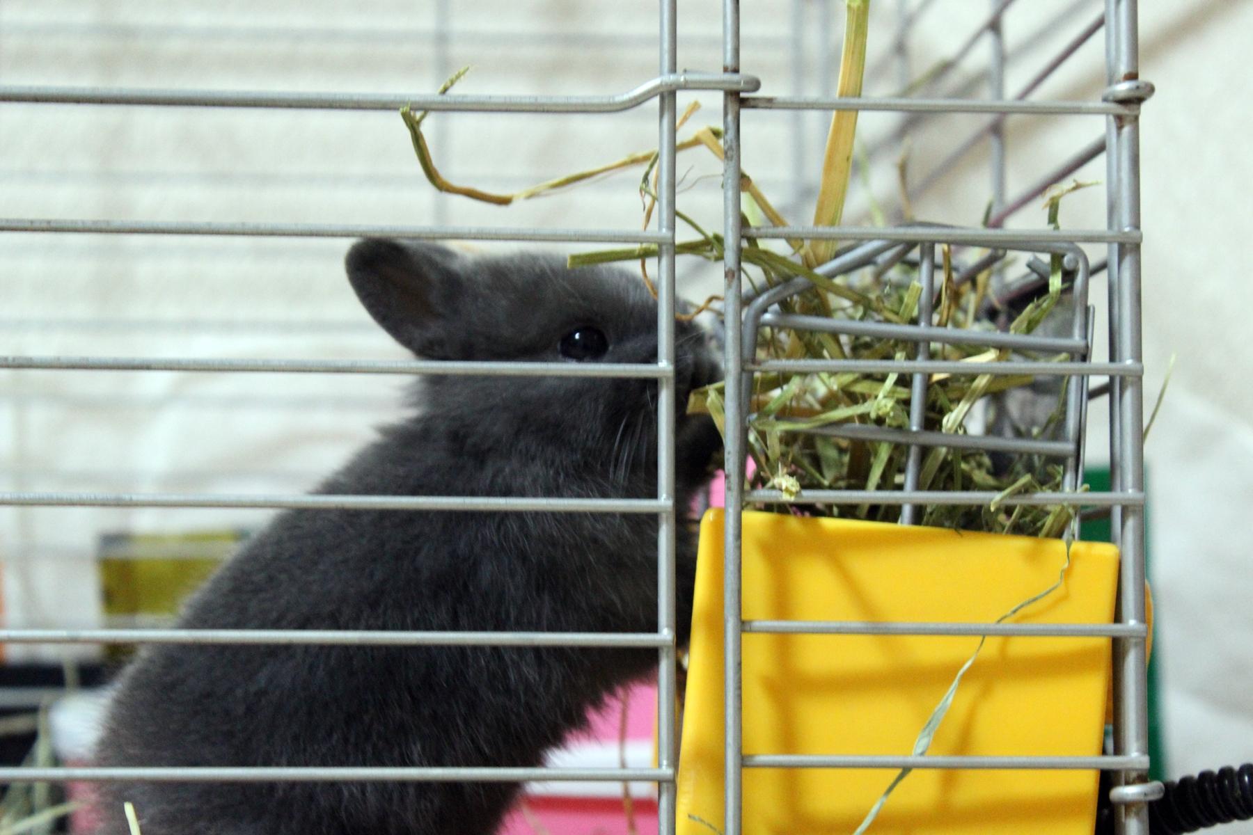 ウサギの飼い方 4 ~まとめ
