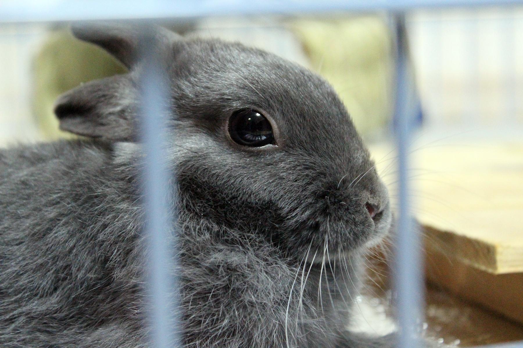 ウサギの病気・斜頚