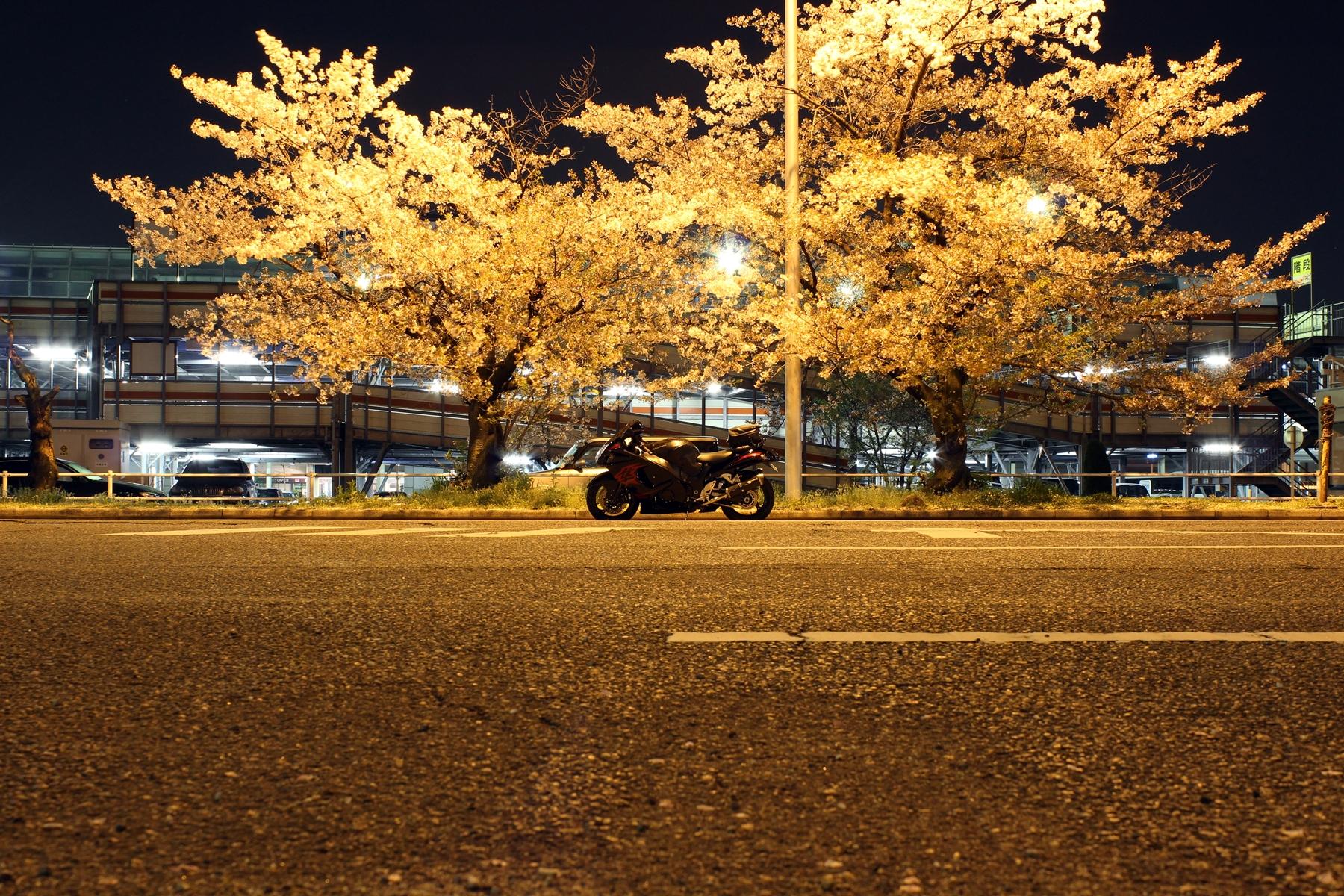 隼と桜 ~in 大阪空港