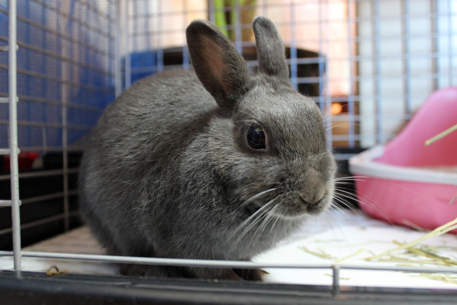 ウサギ邸の掃除
