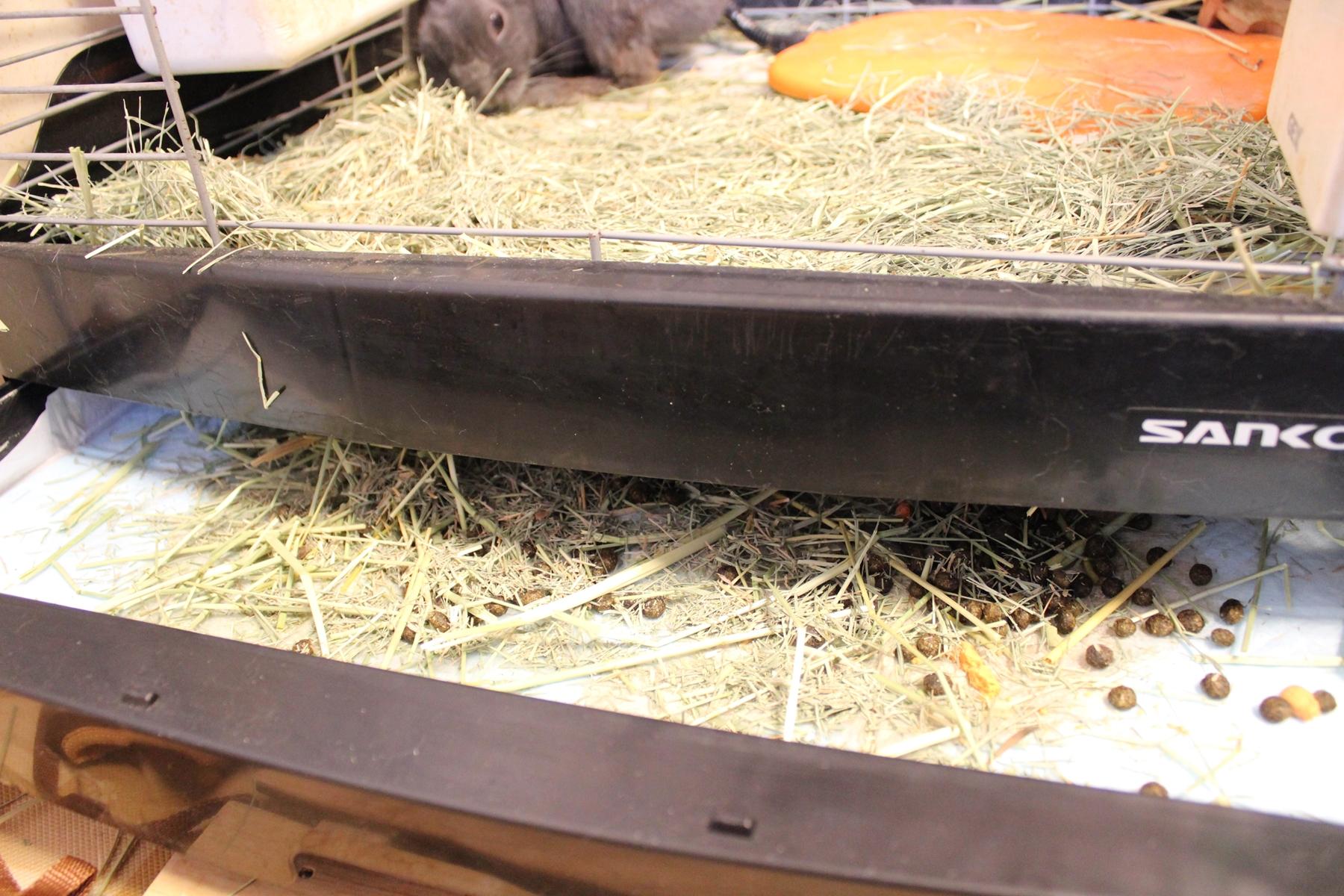 ウサギの飼い方 1 ~動物病院とケージ