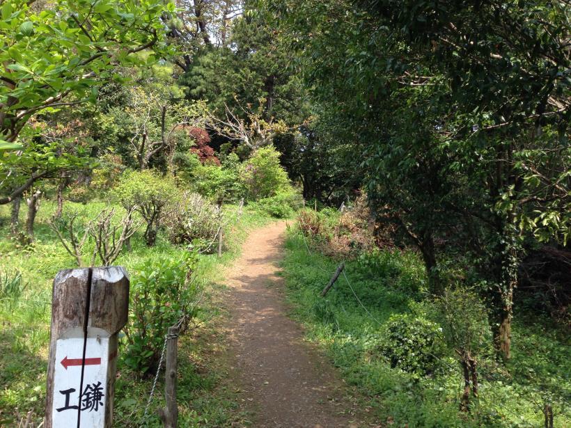 mtsukura35.jpg