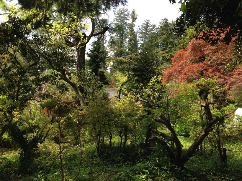mtsukura37.jpg