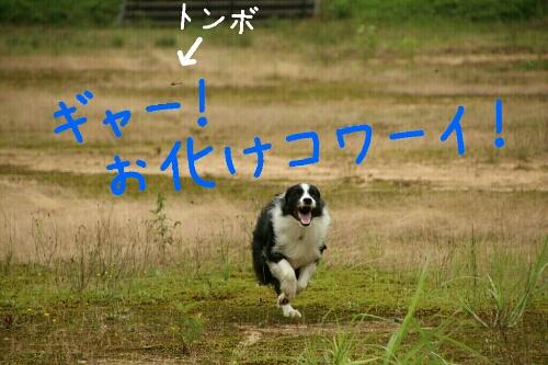 fc2_2014-08-22_01-06-00-044.jpg