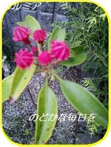 2014052611072370e.jpg
