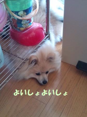 20140614_3.jpg