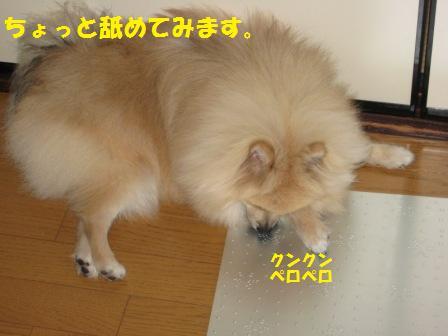 20140808_5.jpg