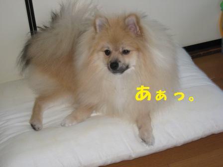 20140922_5.jpg