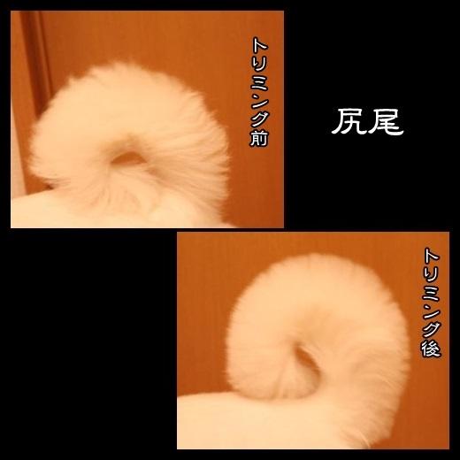 92_20140308121749ff3.jpg