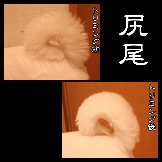 94_20140214124328a48.jpg