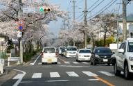 大森2丁目 (名古屋市守山区) の桜 2014-04-02