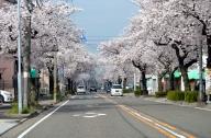 大野木5丁目 (名古屋市西区) の桜 2014-04-02