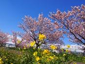 ashigara-20140321-12s.jpg