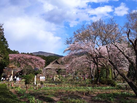 chichibu-20140405-15s.jpg