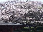 funkoshi-20140404-12s.jpg