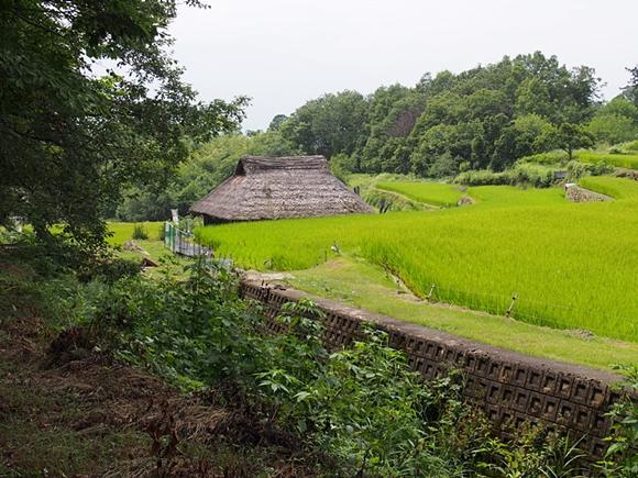 hanako-20140813-15s.jpg