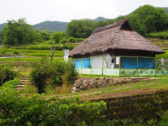 hanako-20140813-17s.jpg