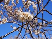 iwamotoyama-20140308-09s.jpg