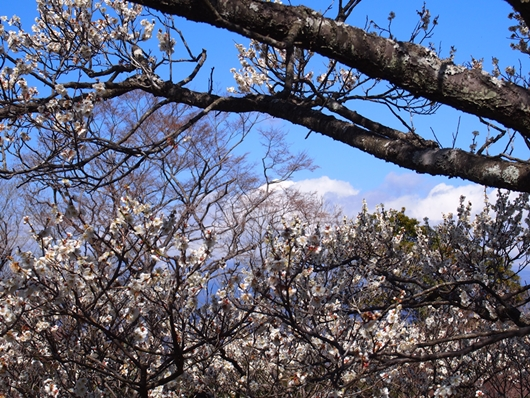 iwamotoyama-20140308-14s.jpg