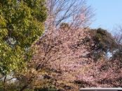 iwamotoyama-20140308-19s.jpg