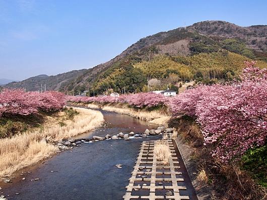 kawazu-20140226-05s.jpg
