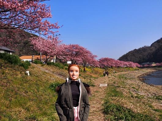 kawazu-20140226-21s.jpg