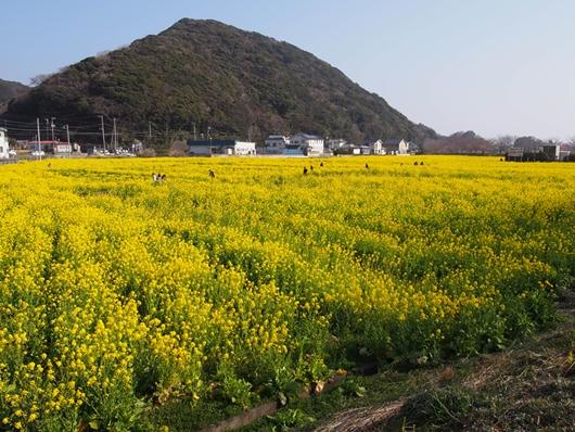 kawazu-20140226-29s.jpg