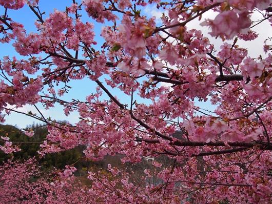 matukawa-20140315-10s.jpg