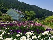 syoubu-20140601-24s.jpg