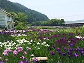 syoubu-20140601-25s.jpg
