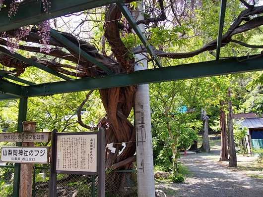 yamanashi-20140504-08s.jpg