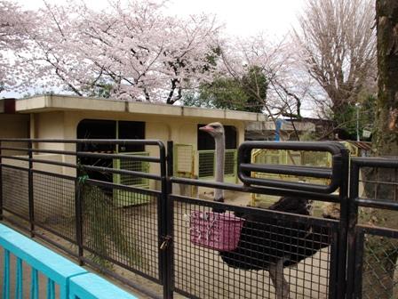 20140402野毛山動物園03