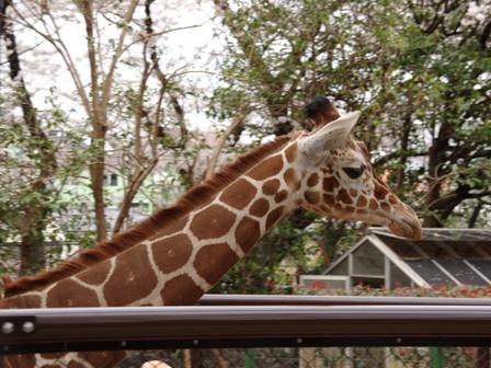 20140402野毛山動物園02
