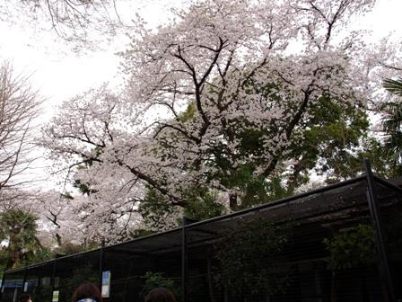 20140402野毛山動物園10