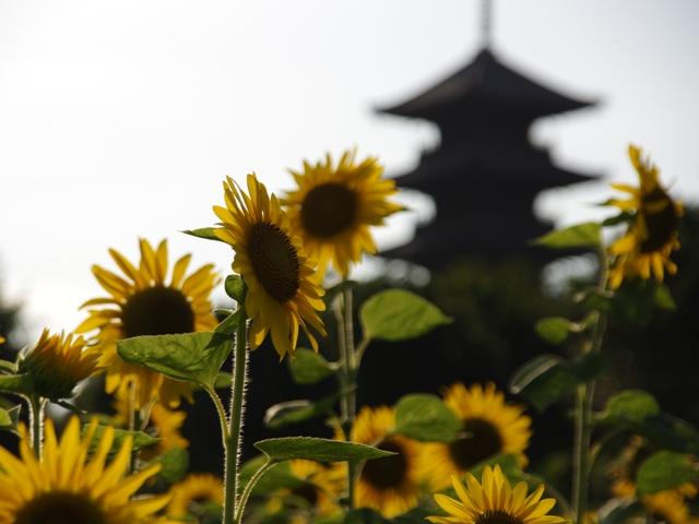 吉備国分寺2014夏