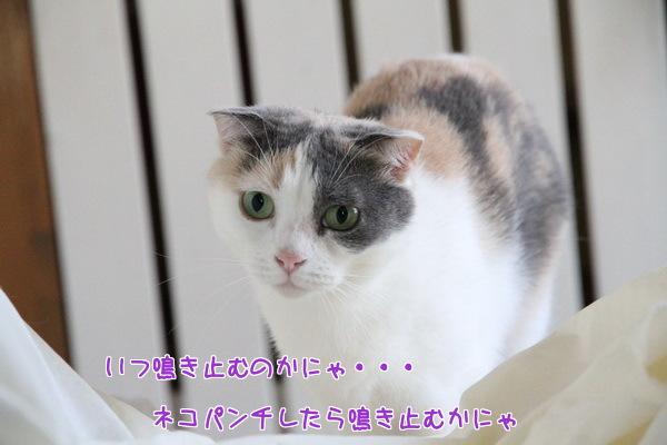 20140618140259feb.jpg