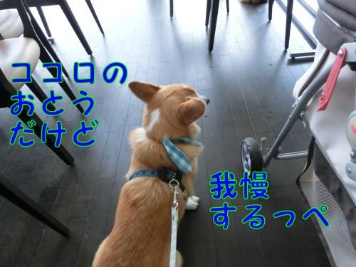 20140805_5.jpg