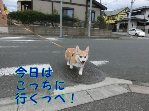 20140921_01.jpg