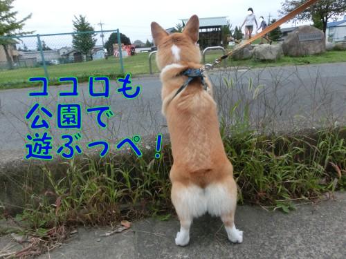 20140921_02.jpg
